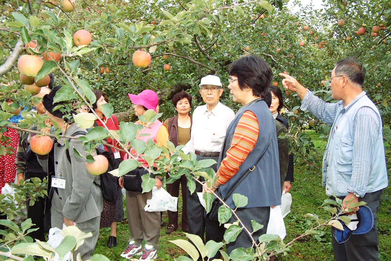 觀光蘋果園