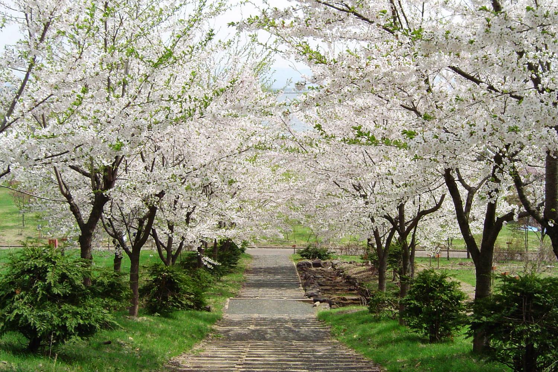 津輕富士見湖賞櫻祭