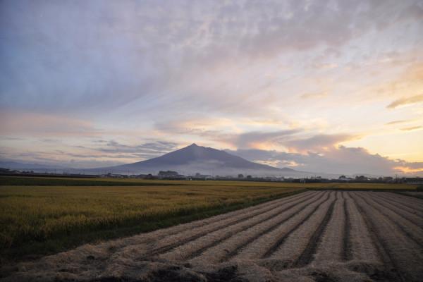岩木山與收割後的稻田