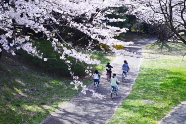 租用自行車前往「鶴舞之橋」